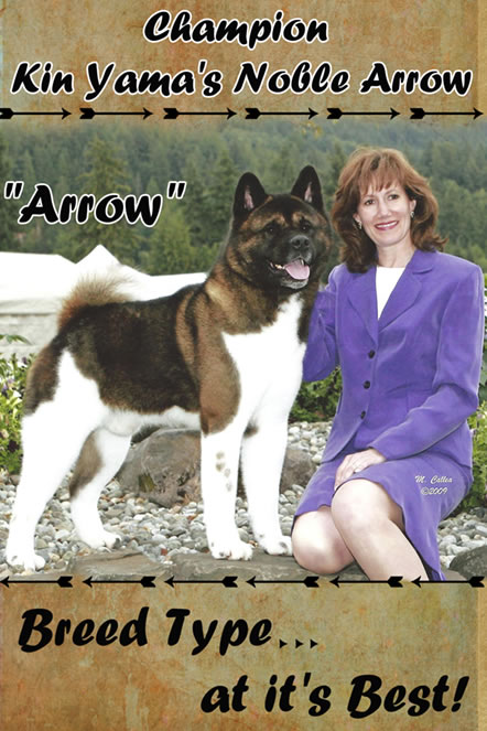 Kin Yama Akitas, Akitas in Washington, Ch. Kin Yama's Noble Arrow, Elizabeth Kowalski Akita breeder